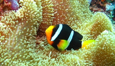 ellaidhoo-maldives-house-reef-624-03.jpg